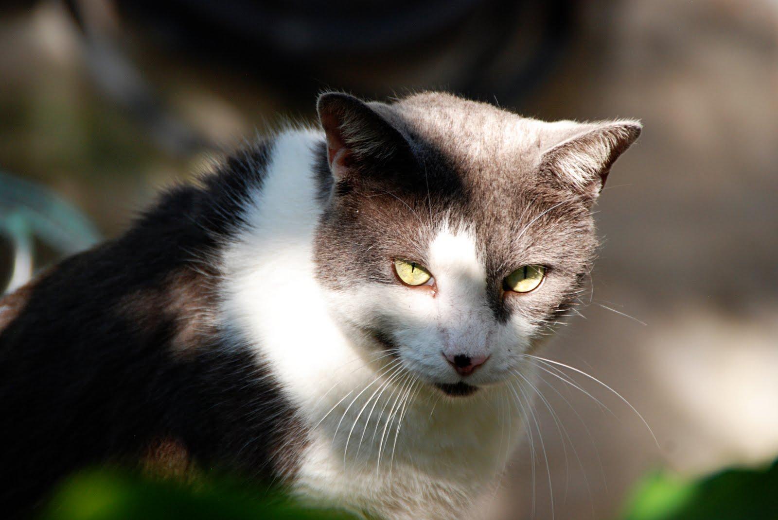Планета для котов