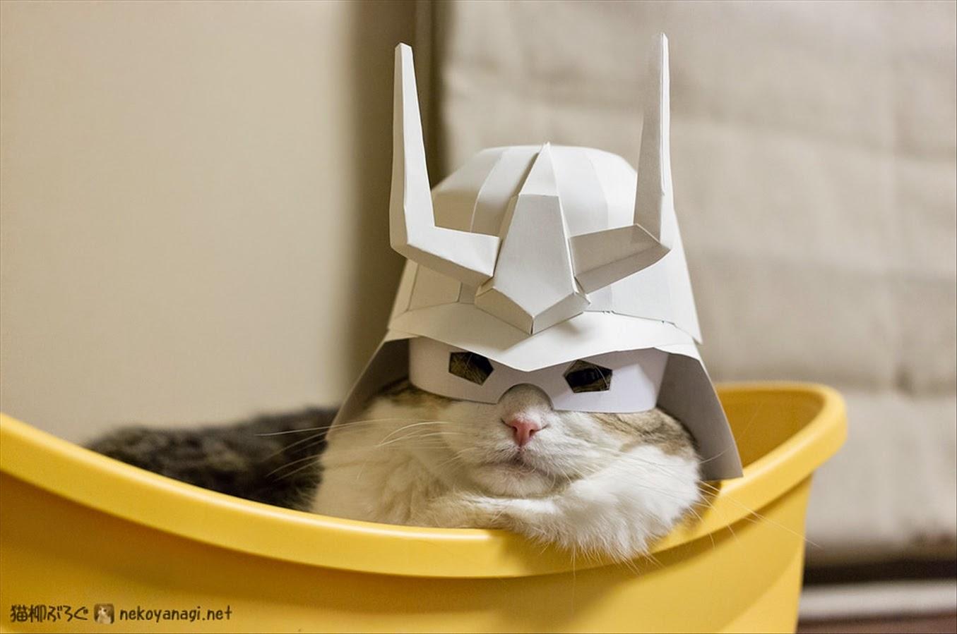 シャア風猫