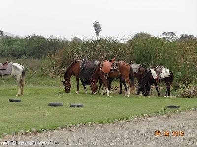 Los Mangales Huacho