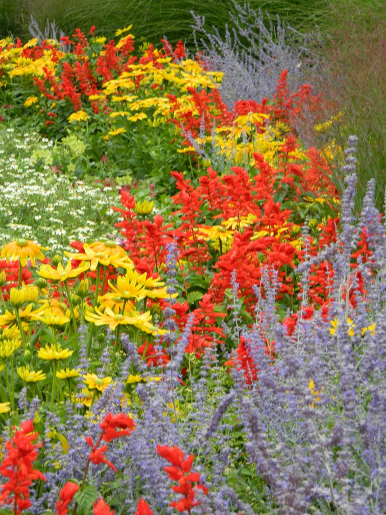 James Gardens primary colour annuals late summer by garden muses- a Toronto gardening blog