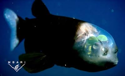 10 amazing transparent animals on earth