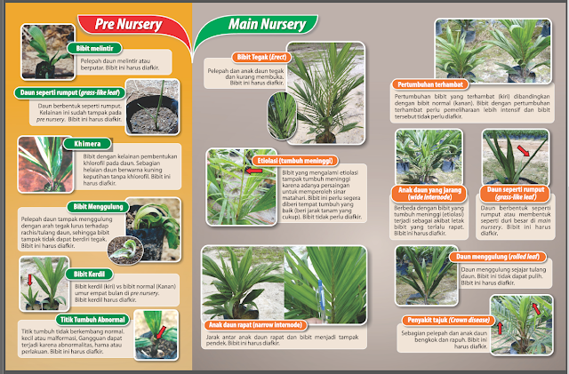 Budidaya sawit, analisa budidaya sawit, analisis budidaya sawit, artikel budidaya sawit, budidaya bibit sawit, budidaya buah sawit, budidaya jamur janjang sawit, budidaya jamur janjangan sawit, budidaya jamur merang media sawit, budidaya jamur sawit, budidaya kelapa sawit, budidaya kelapa sawit 2012, budidaya kelapa sawit adalah, budidaya kelapa sawit di indonesia, budidaya kelapa sawit di lahan gambut, budidaya kelapa sawit di lahan rawa, budidaya kelapa sawit di tanah gambut, budidaya kelapa sawit download, budidaya kelapa sawit filetype.pdf, budidaya kelapa sawit indonesia, budidaya kelapa sawit lahan gambut, budidaya kelapa sawit lengkap, budidaya kelapa sawit marihat, budidaya kelapa sawit nasa, budidaya kelapa sawit organik, budidaya kelapa sawit pada lahan gambut, budidaya kelapa sawit pada tanah gambut, budidaya kelapa sawit pdf, budidaya kelapa sawit ppt, budidaya kelapa sawit sastrosayono, budidaya kelapa sawit tanah gambut, budidaya kelapa sawit terbaru, budidaya kelapa sawit unggul, budidaya kelapa sawit yang baik, budidaya kelapa sawit.com, budidaya kelapa sawit.doc, budidaya lele sawit boyolali, budidaya pembibitan sawit, budidaya perkebunan sawit, budidaya pohon sawit, budidaya sawit, budidaya sawit 2012, budidaya sawit benih, budidaya sawit dan karet, budidaya sawit di lahan basah, budidaya sawit di lahan berpasir, budidaya sawit di lahan gambut, budidaya sawit di lahan gambut pdf, budidaya sawit di lahan pasang surut, budidaya sawit di lahan pasir, budidaya sawit di lahan rawa, budidaya sawit di rawa, budidaya sawit di tanah gambut, budidaya sawit dilahan gambut, budidaya sawit lahan gambut, budidaya sawit lengkap, budidaya sawit nasa, budidaya sawit pdf, budidaya sawit pemeliharaan, budidaya sawit ppt, budidaya sawit unggul, budidaya sawit yang baik, budidaya sawit yang benar, budidaya sawit yg baik, budidaya sawit.com, budidaya tanam sawit, budidaya tanaman kelapa sawit 2010, budidaya tanaman kelapa sawit ebook download, budidaya tanaman sawit, bu