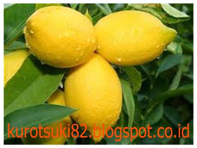 Minum Air Lemon Hangat, Dapatkan 9 Manfaat Kesehatan Ini!