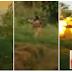 Απίστευτο: Τζιχαντιστές εκτελούν όμηρο με αντιαρματικό όπλο! [Βίντεο]