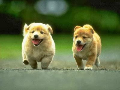 cute running puppies