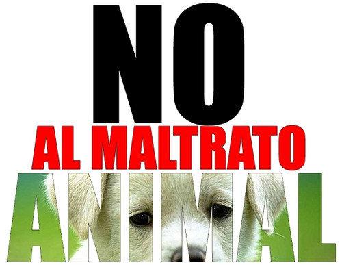 Se deben proteger a los animales!