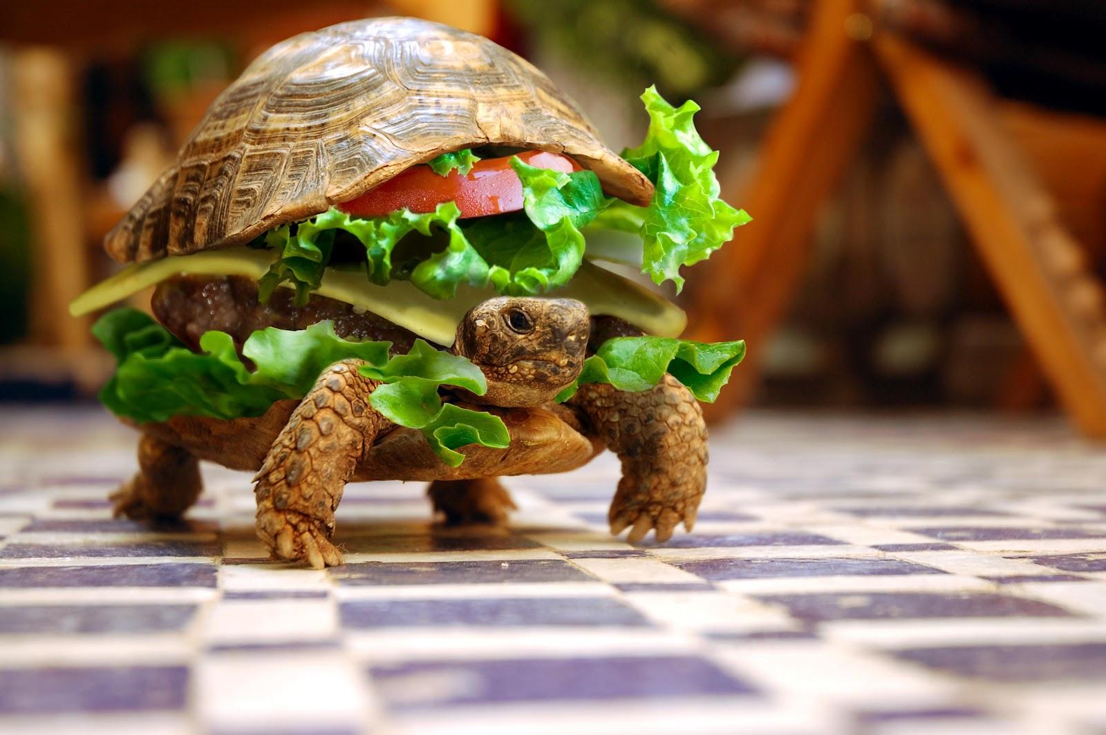 Tortuga hamburguesa divertida