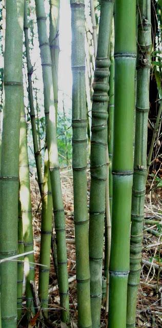 Bamboo Fishing Poles8