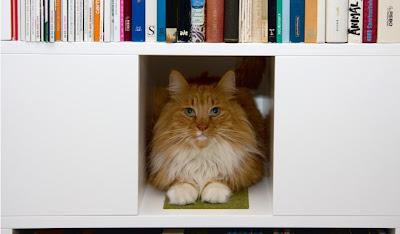 El rinc n de alejandr a febrero 2012 - Estanterias para gatos ...