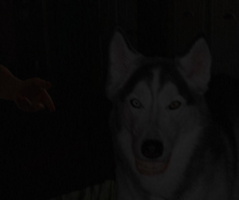 Imagen Original Smile.dog