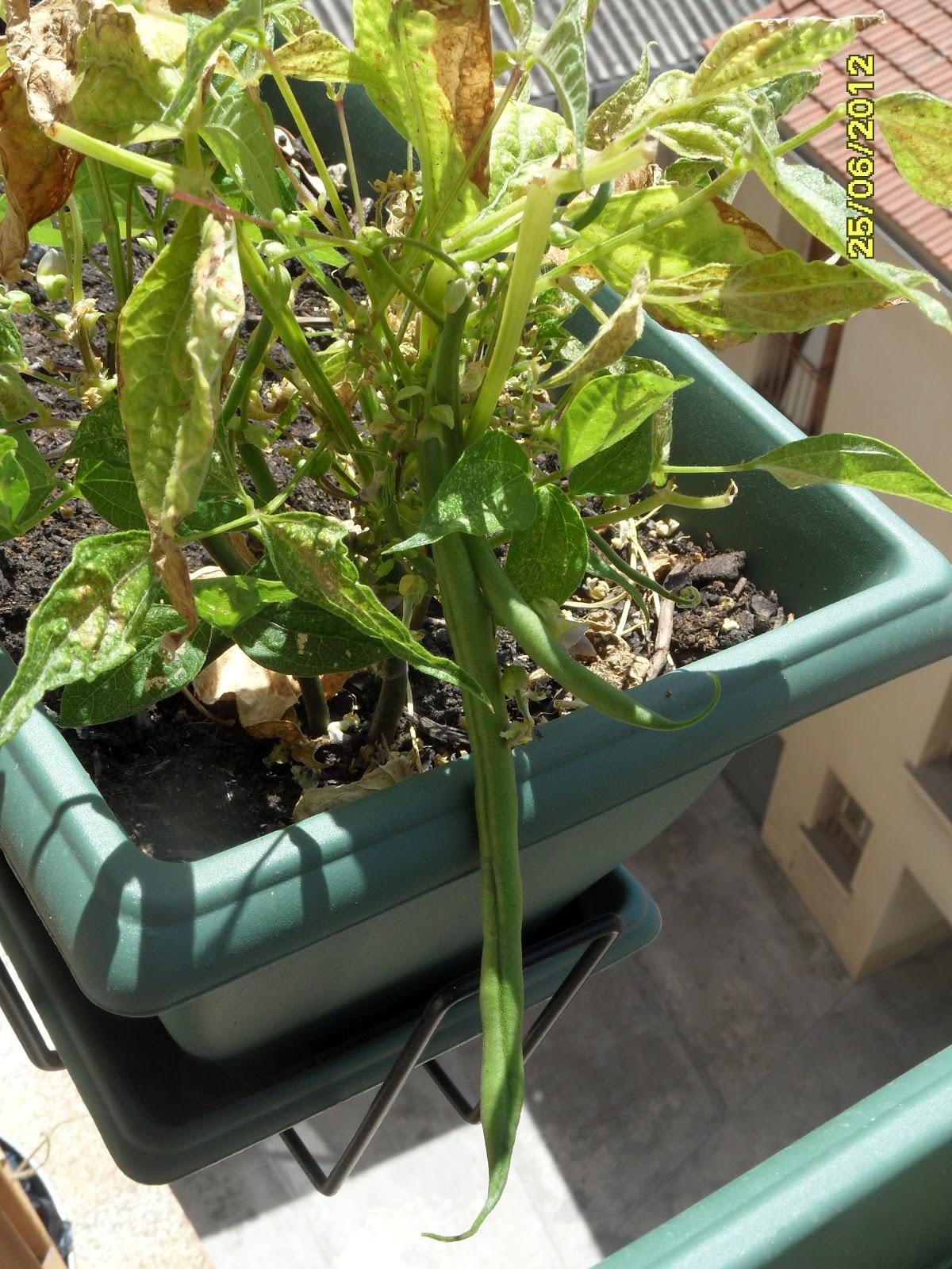 maigrir avec la m thode montignac phase 1 le jardin potager de anne. Black Bedroom Furniture Sets. Home Design Ideas
