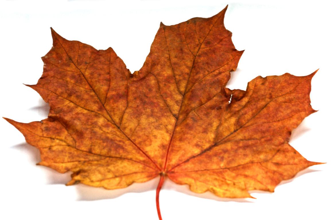 Autumn Lights Picture: Autumn Leaves