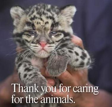 Спасибо за заботу о животных