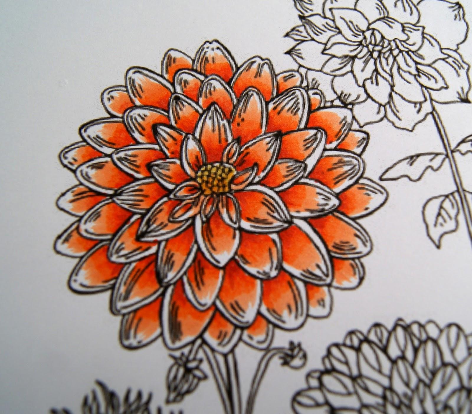 Imagenes De Diferentes Tipos De Rosas - Fotos de flores ROSAS DE VARIOS COLORES