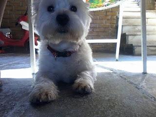 Χάθηκε 3/11 το σκυλάκι της φωτογραφίας απο τον Αλιμο (κοντα στα Mc Donald's).