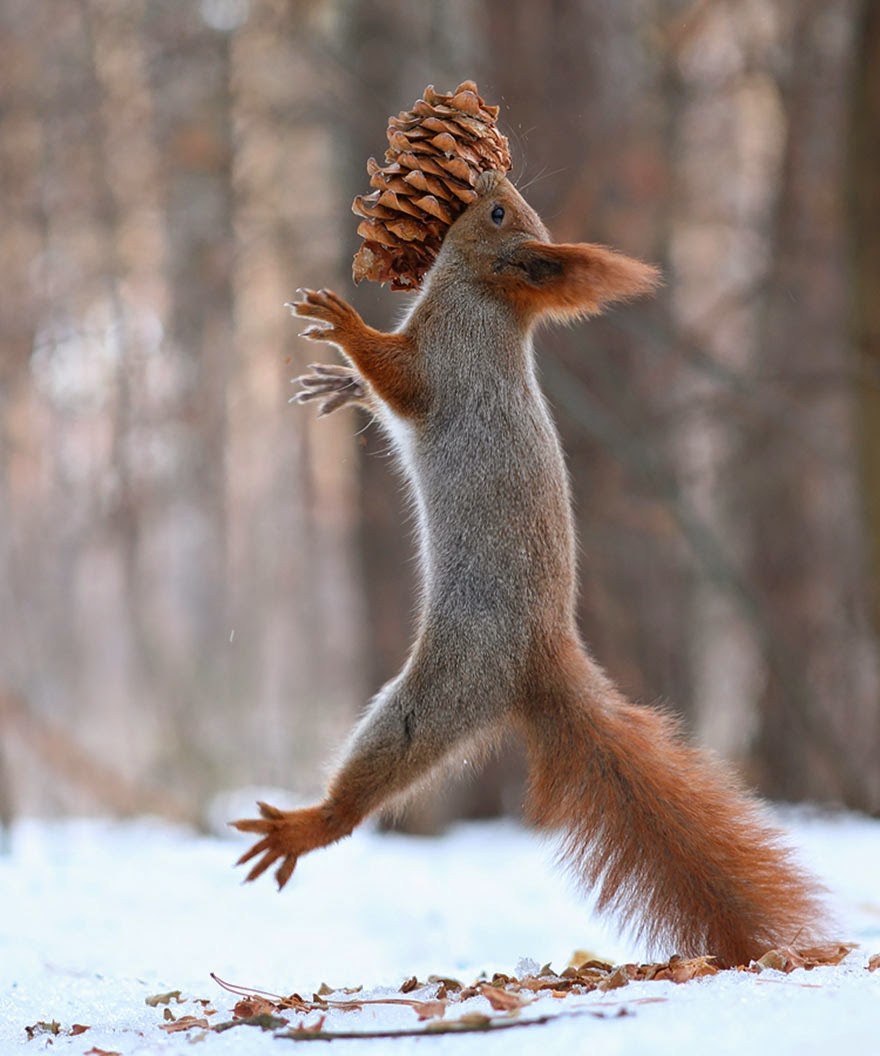 adorable squirrel photos vadim trunov-10