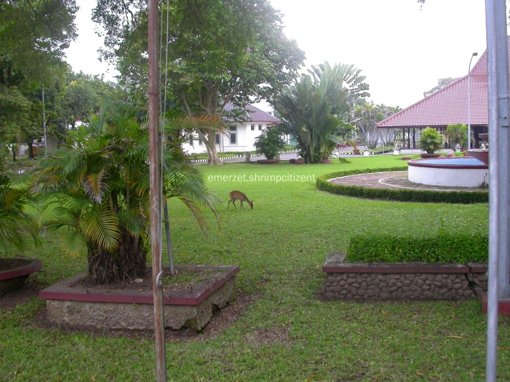 Kota Cirebon, Halaman Pendopo Bupati Cirebon - terlihat seekor rusa sedang makan di halaman Pendopo