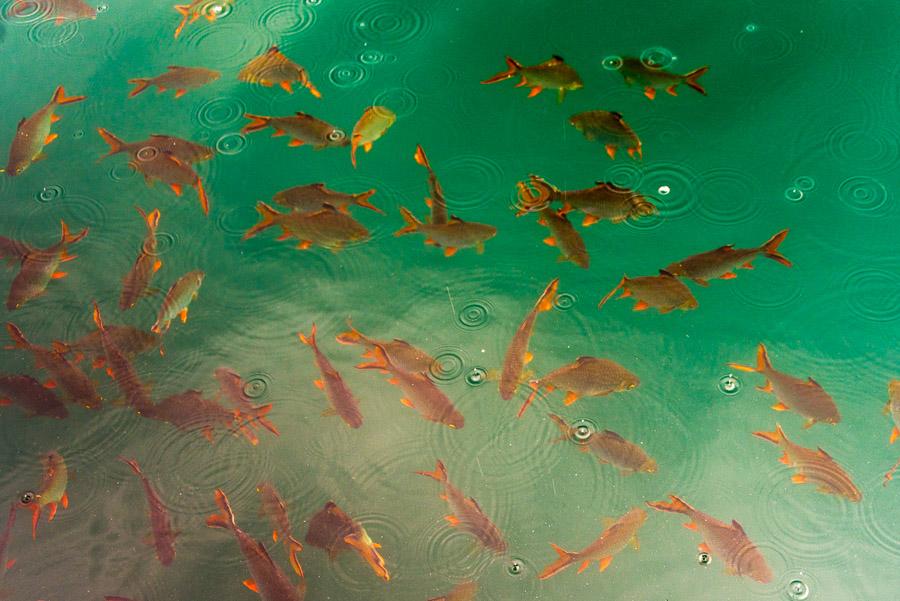 Trip to Cheow Lan Lake