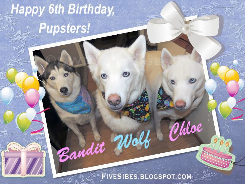 Happy 6th Birthday to the Pupsters