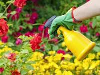 Kapan Waktu Yang Tepat Menggunakan Pestisida