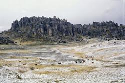 Bosco di pietre di Huayllay