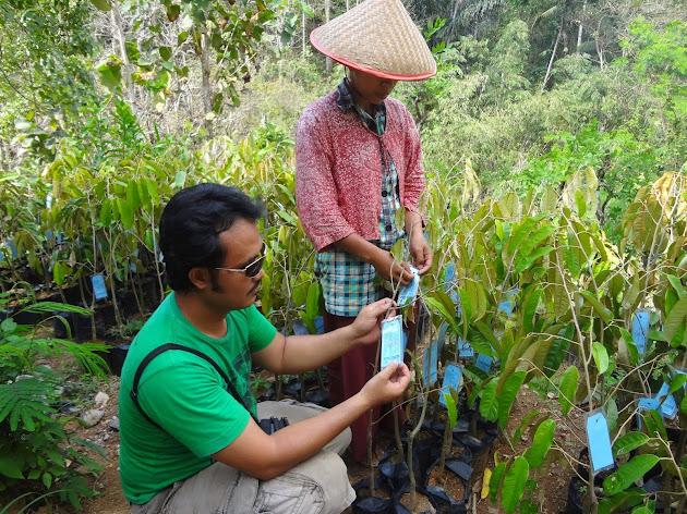 Pak Rob dan Benih Durian Menoreh Kuning Bersertifikat