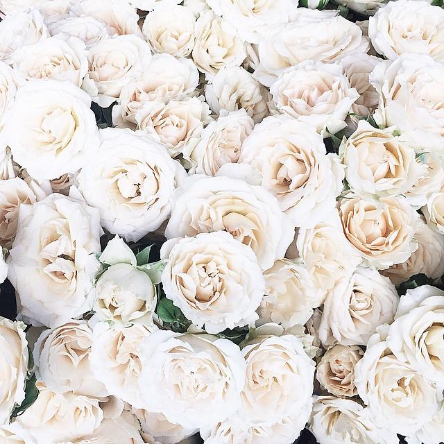 Roses,,
