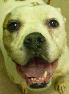 Kadance Needs a Home/ Available at County Pound