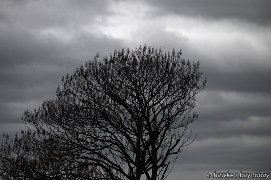 Barren tree, bleak sky, weather forecast for rain - tree on Ruahapia Rd, Whakatu, Hastings. photograph