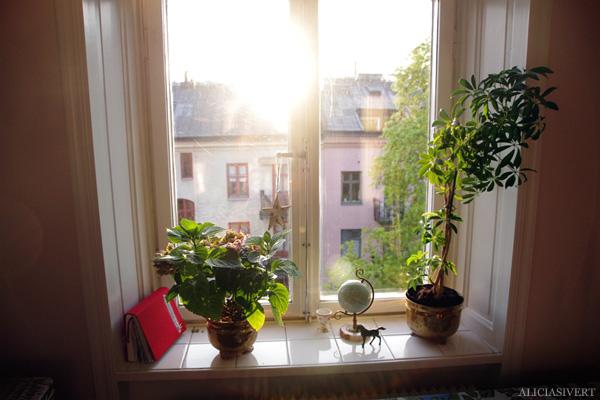 aliciasivert, alicia sivertsson, balkong, balcony, gryning, dawn, soluppgång, window, flowers, backlight, fönster, blommor, motljus