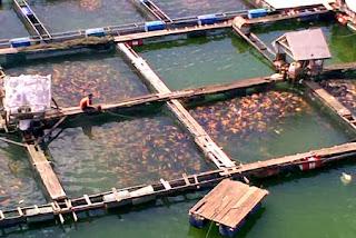 Jual Waring Ikan Untuk Kolam Keramba