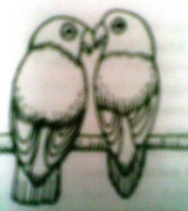 Lovebird Jantan dan Betina