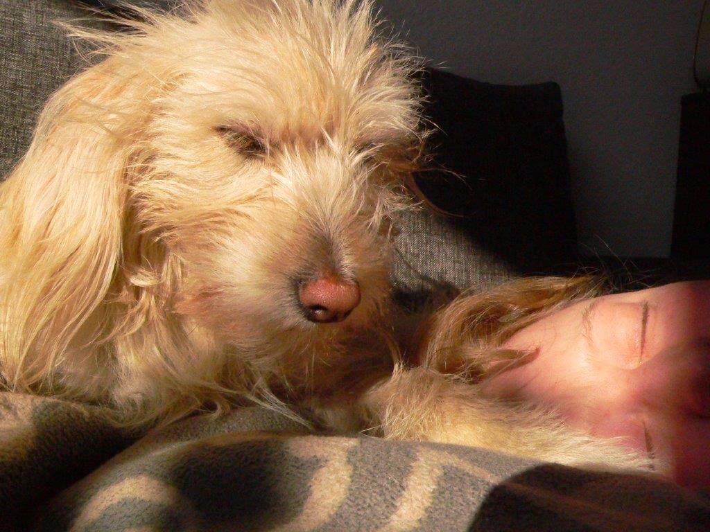 Hund Entspannung entspannen liegen relaxen achtsamkeit sonne gesicht