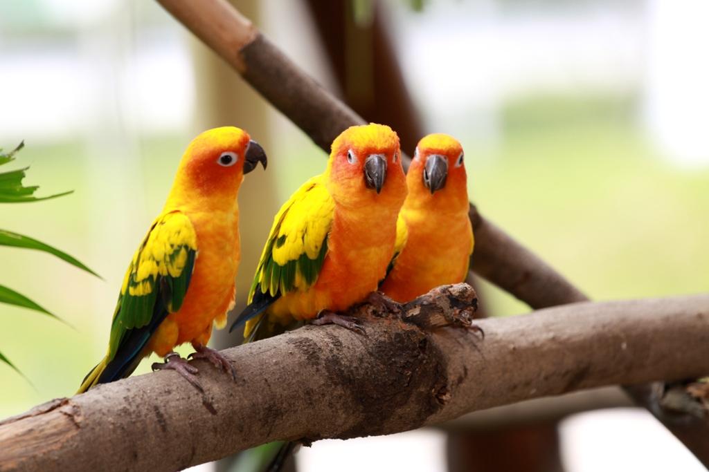 Colourful Birds Wallpaper Birds Wallpaper 3