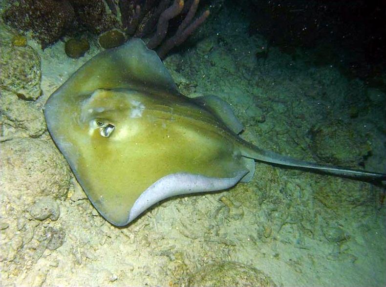 hidupan marin seperti ikan mempunyai pelbagai jenis spesies entry ini