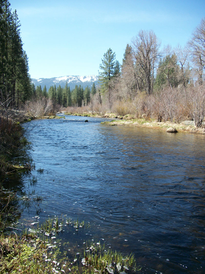 Jon baiocchi fly fishing news middle fork feather river for Yuba river fishing report