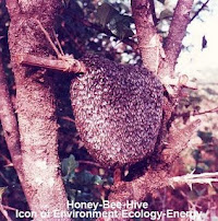 Honey-bee-hive: icon of Environment-Ecology-Energy