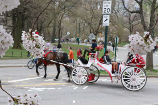 PRIVATE CARRIAGE TOUR CENTRAL PARK NYC
