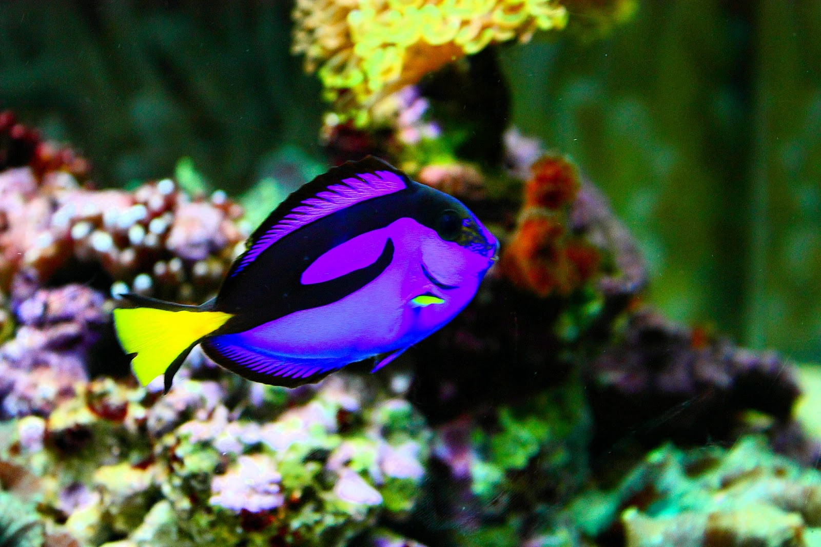 Unique wallpaper exotic fish wallpaper hd for Exotic tropical fish