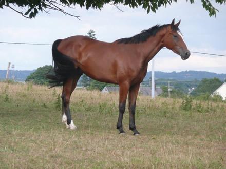 Clasesdecaballosfabi clases de caballos - Caballo silla frances ...