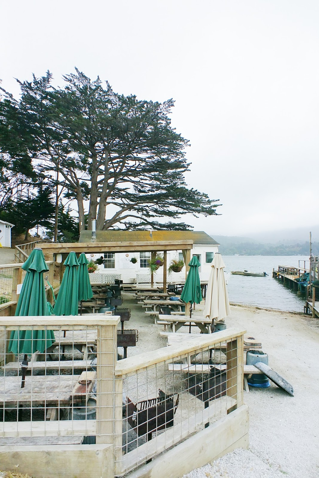 travel with the tasteful me in Tomales Bay, California