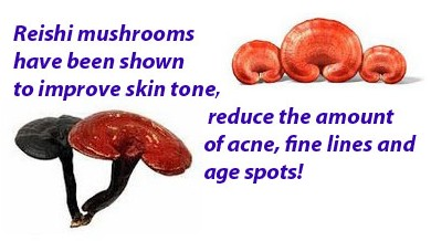 Reishi mushrooms benefits 3