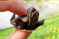 Different Moments of Tortoises - Turtle Kingdom