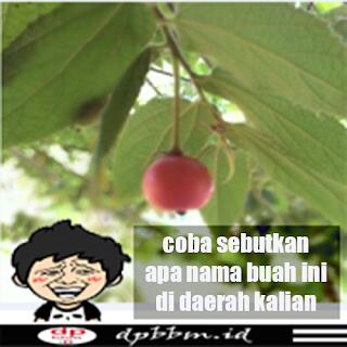 gambar keren buah unik
