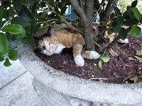 Foto di un gatto che sonnecchia in un vaso