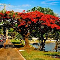 Brazlândia