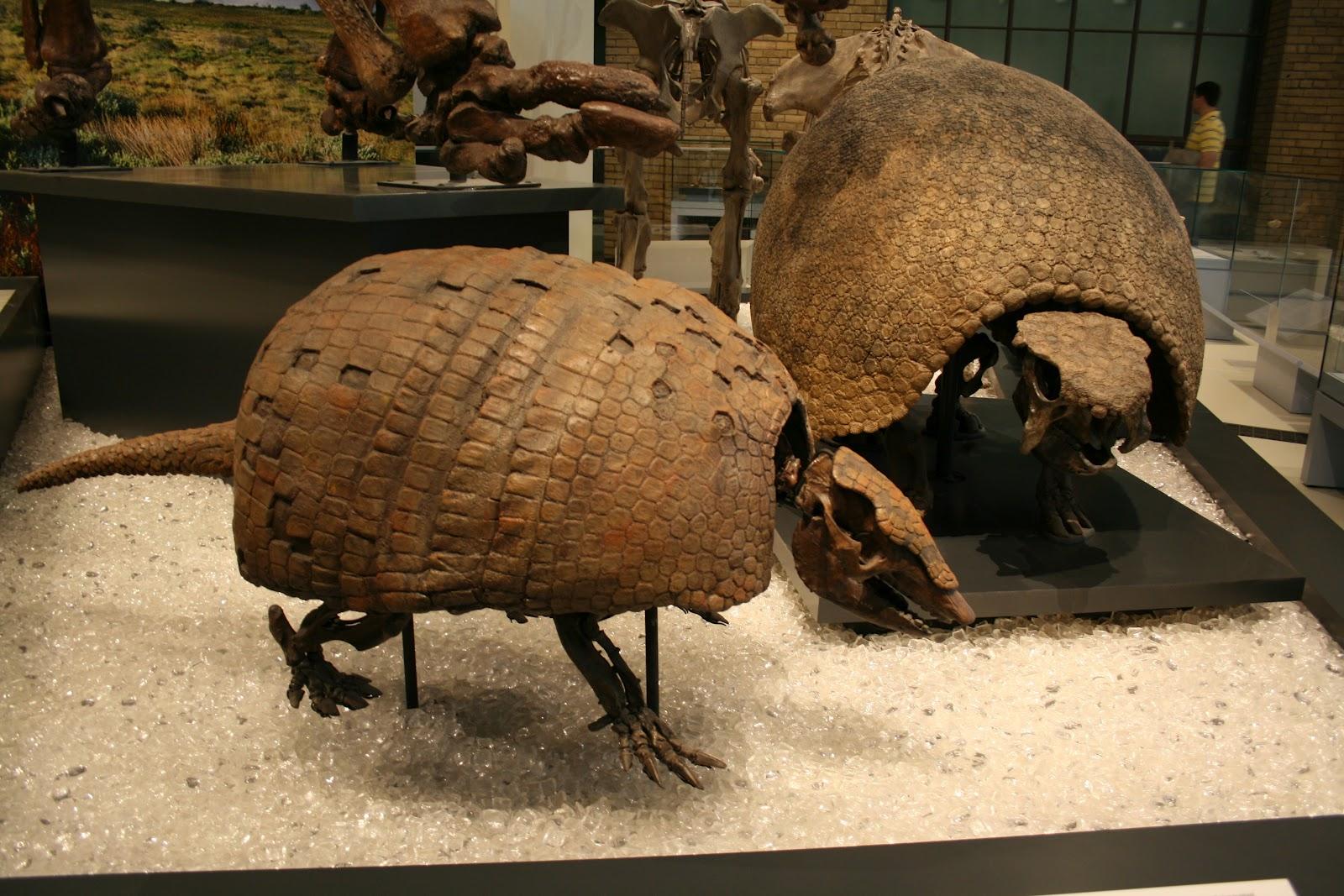 Ancient giant armadillo - photo#19