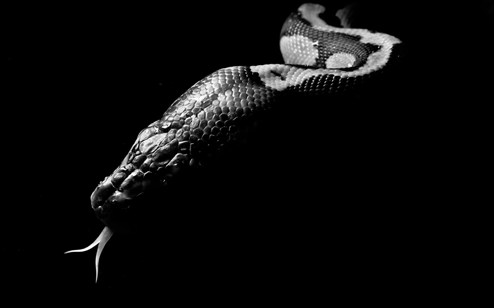 snakes amp vipers wallpapers wallpaper albums