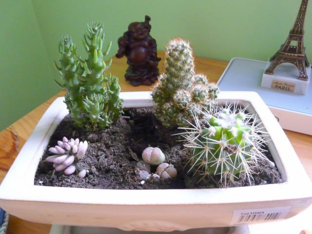 Un paseo por el para so mini jard n de cactus en 4 pasos for Cactus cuidados interior