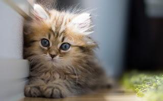 Cute Little Feathery Cat